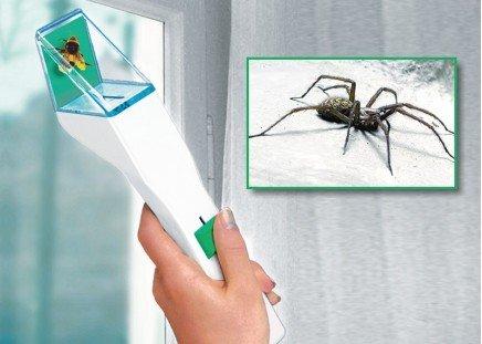 Insekten-Schnapper